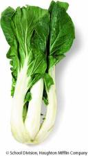 This is a picture of a bok choy...