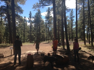 10 + 1 Things to do in Flagstaff, AZ