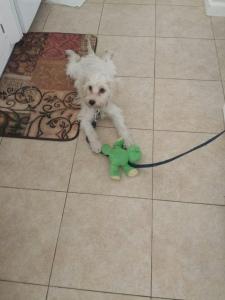 He loves his little froggy friend