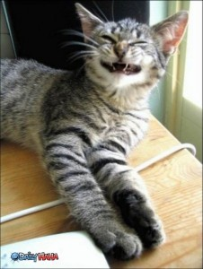 hilarious-funny-cute-pictures-of_strange_smile_cat-451x600