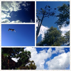 sky collage2